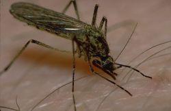 Укус насекомого, опухоль и покраснение: лечение. Фото