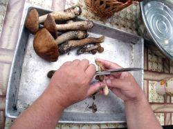 Как готовить подосиновики и подберезовики? Кулинарные советы