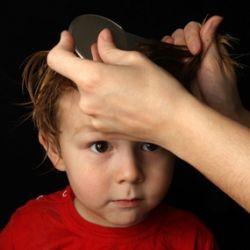 Вши головные: как передаются, симптомы, лечение
