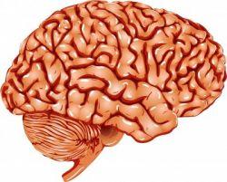 Чистка сосудов головного мозга. Чистка сосудов головного мозга лекарствами