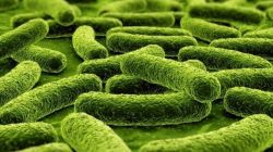 Медленные углеводы: список продуктов