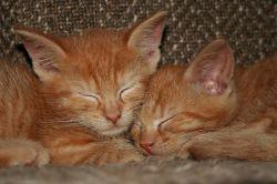 К чему снятся котята - к добру или к злу?
