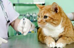 прививка от паразитов