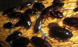 Видеть во сне тараканов. Толкование снов: тараканы
