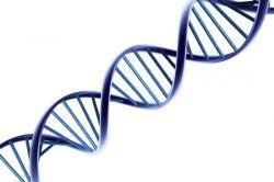 Цитогенетический метод изучения наследственности человека