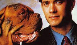 Кино про собак. Рекомендовано к семейному просмотру