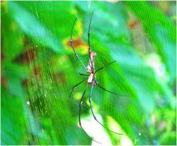 Что предвещает паук в доме. Приметы и их значение
