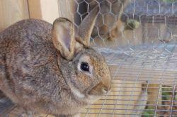 Разведение кроликов в домашних условиях - несколько полезных советов