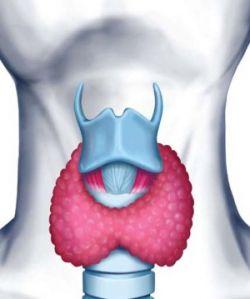 Тиреоидит щитовидной железы. Причины, симптомы, диагностика и лечение