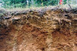 Почва - это что такое?