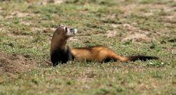 Животные степи России - чарующее разнообразие природы