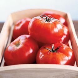 Как правильно посадить помидоры, чтобы получить богатый урожай