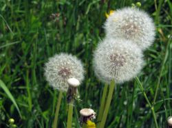 Что такое флора? Значение термина