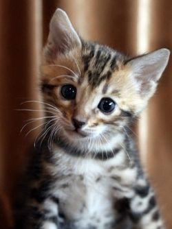 Как назвать котенка-мальчика: выбор на всю жизнь