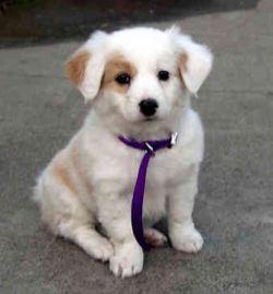 Как назвать мальчика-собаку