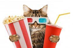 Попкорн: калорийность и польза