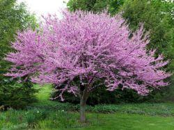 Декоративное дерево: концепции оформления приусадебной территории. Виды деревьев и кустарников
