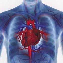 Опасна ли дополнительная хорда в сердце?