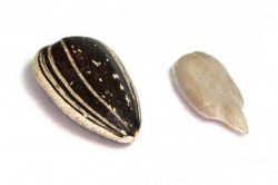 повышают ли семечки холестерин