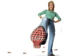 Средство от муравьев: советы и рецепты