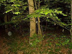 И снова про правила поведения в лесу...