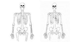 Строение грудной клетки человека, особенности строения по возрастным и половым признакам