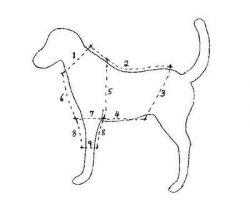 Как сшить одежду для собаки: основные правила
